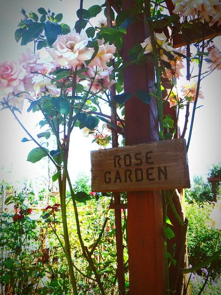 Taking Photos Hello World Enjoying Life Rustic Charm Sunshine Flower Collection Rose Garden Signs_collection Marysville,WA Jennings Park