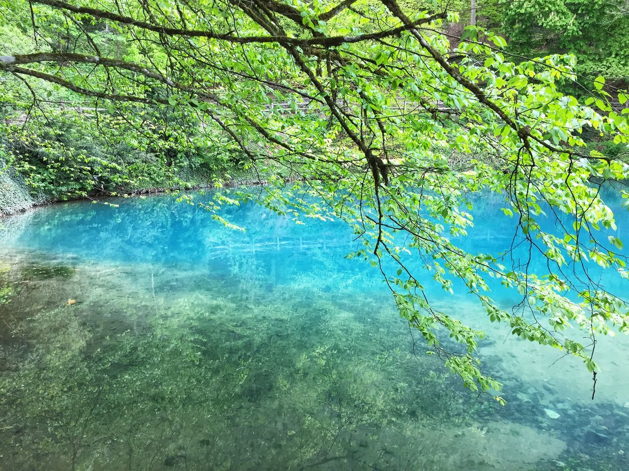 tree, plant, beauty in nature, water, tranquility, growth, nature, day, branch, forest, scenics - nature, no people, lake, green color, waterfront, reflection, tranquil scene, idyllic, land, outdoors, clean, turquoise colored