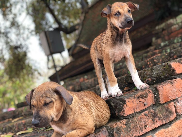 Two beautiful dog Dog Pets Domestic Animals Animal Themes Mammal Outdoors EyeEmNewHere Day Looking At Camera No People
