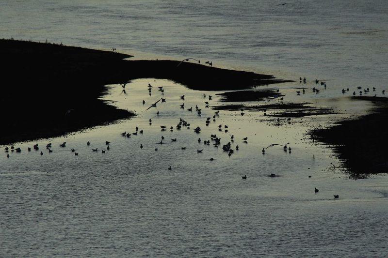 Oiseaux sur la Loire Loire Oiseaux Birds Viesauvage Wildlife Nature Animals Animal Wildlife Tours,France Touraine Loire Valley
