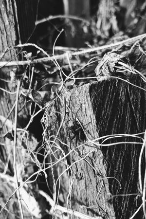 No People Nature Eye Em Nature Lover BW Transcience BW Collection Black & White EyeEm Best Shots - Black + White Чб Macro Photography EyeEm Gallery EyeEmNewHere Plant Nature Spider Macro Spider Macro_perfection Macro_collection Macroshot Black&white чернобелоефото чбфотография чбфото черно-белое фото черно-белое EyeEm Nature Lover