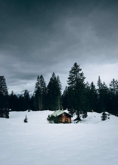 Trees and houses on snow covered land against sky