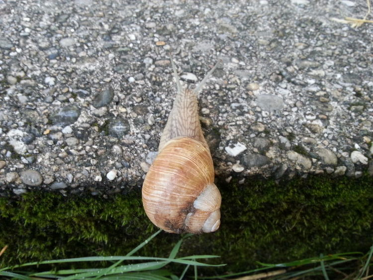 Snail One Animal Animal Themes High Angle View Animals In The Wild Close-up Beauty In Nature Tranquility The Purist (no Edit, No Filter) My View EyeEm Nature Lover The Great Outdoors - 2017 EyeEm Awards The Purist Stepbystep