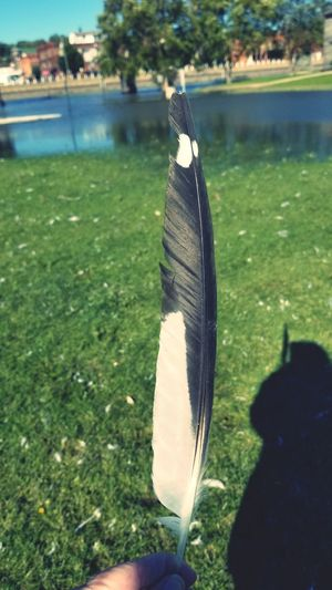 Feather  Seagull Feather Water Fishing Tackle Fishing Fish Catch Of Fish Hanging Close-up Grass Autumn Mood