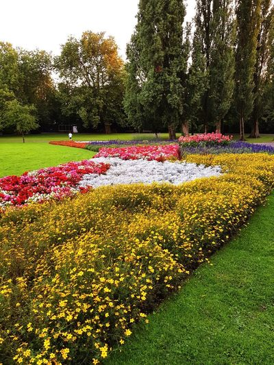 Flower Growth Nature Beauty In Nature Tree Day Outdoors Plant Freshness Abundance No People Field Tranquility Park - Man Made Space Flowerbed Grass Water Scenics Multi Colored Sky Paint The Town Yellow