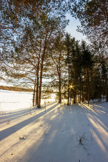 Winter. In the woods by the river. Beauty In Nature Cold Temperature Day Nature No People Outdoors Scenics Sky Snow Sun Sunlight Sunlight And Shadow Sunset Tree Winter