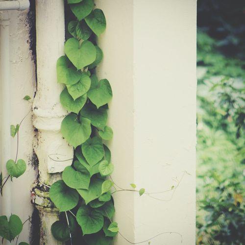 Money plant! Things That Are Green Random(: