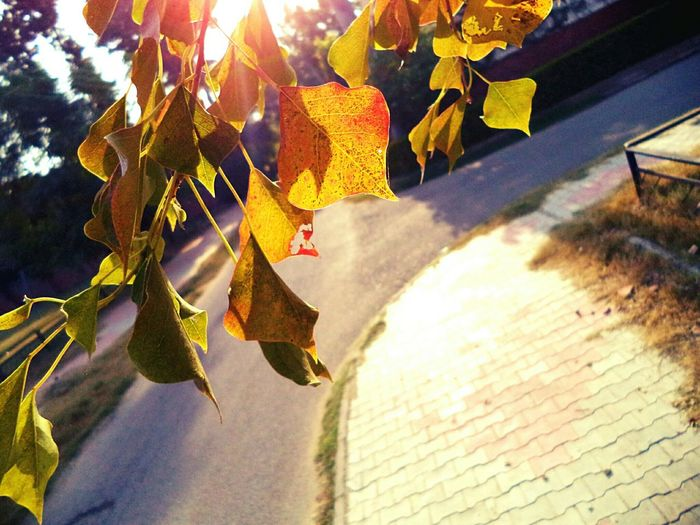 Sunlight Leaves Natural Photography Simple And