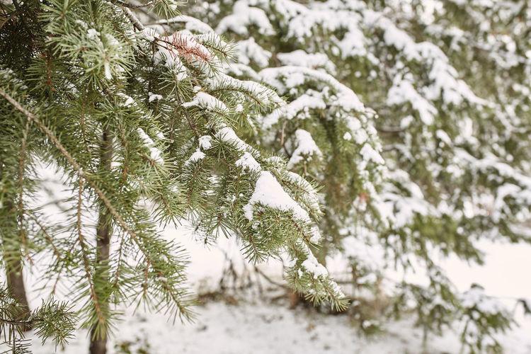 A Spring snow