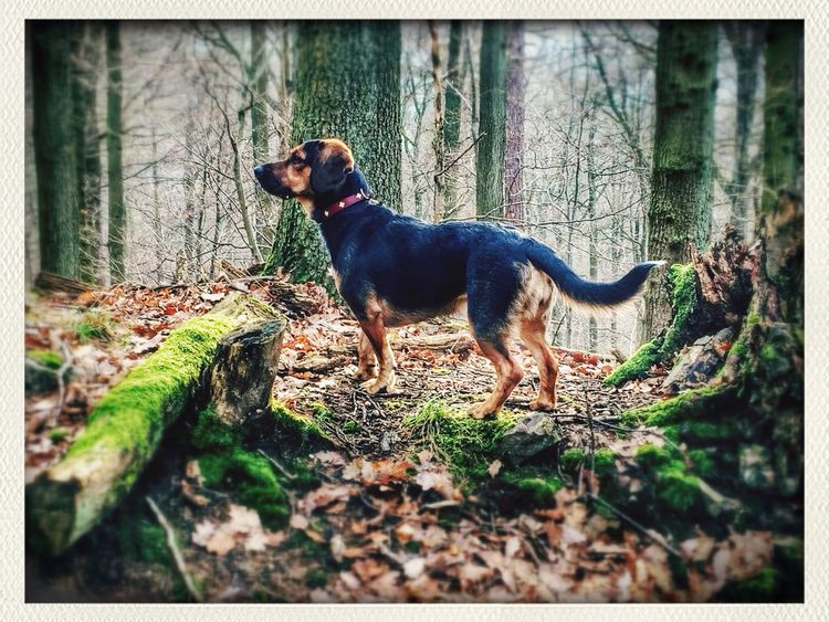 In the wilderness. Dog Forest Activity