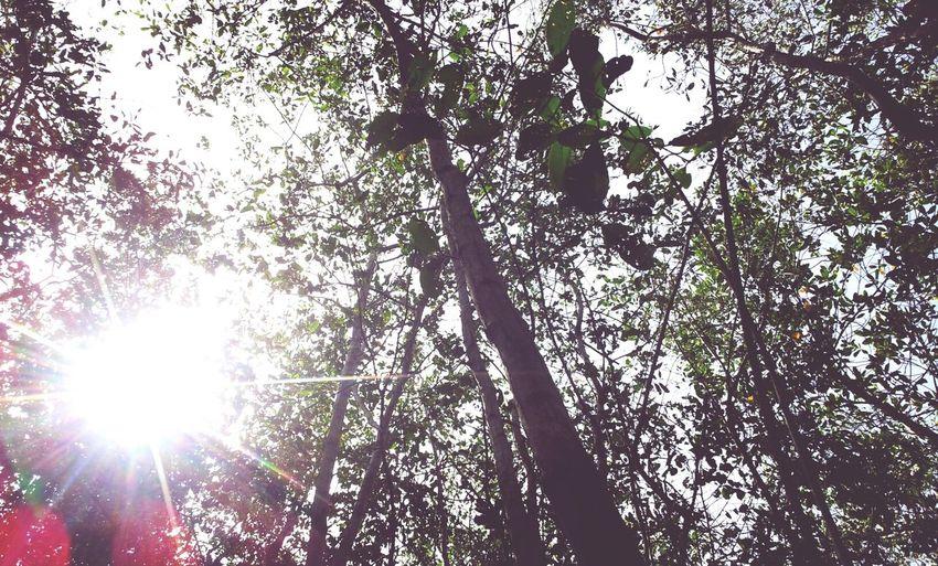 Bosque De Manglares En Piñones Nature