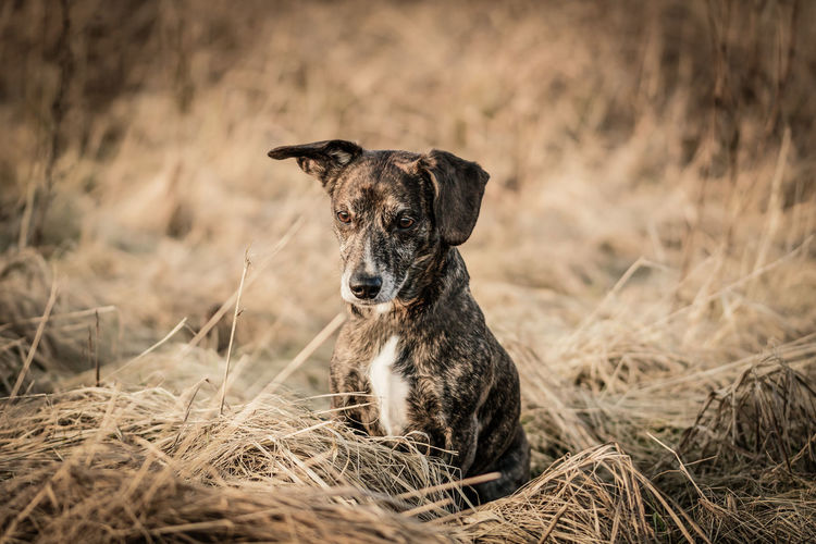 Dog Sitting On Grassy Field