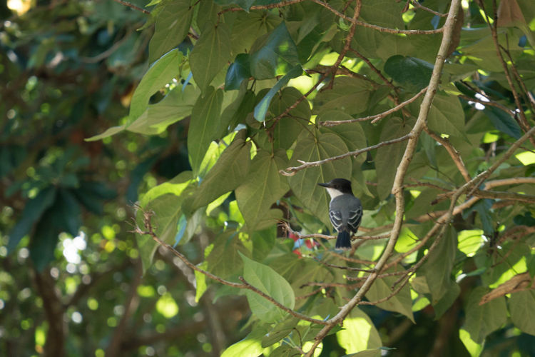 Alturas de Banao: Tropical Bird Alturas De Banao Animal Themes Animal Wildlife Animals In The Wild Beauty In Nature Bird Branch Cuba Cuba Collection Day Growth Leaf National Park Nature Nature No People One Animal Outdoors Perching Tree