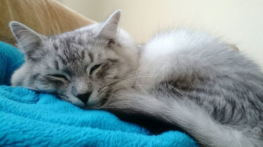 Cat♡ Cats Of EyeEm My Cat Sleepy Kitty Sleepyhead Hello World Привет мир =) мой кот Соня луна