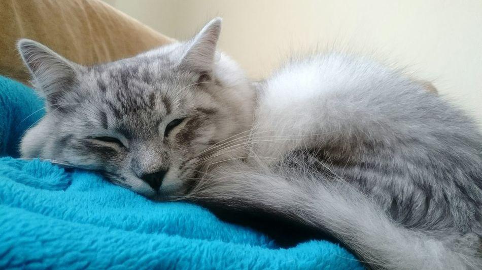 Cat♡ Cats Of EyeEm My Cat Sleepy Kitty Sleepyhead Hello World Привет мир =) мой кот Соня луна