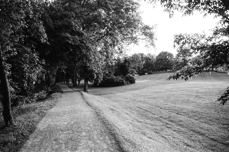 Film Beauty In Nature Blackandwhite Day Film Photography Growth Leica Nature No People Outdoors Road Scenics Sky The Way Forward Tranquility Tree