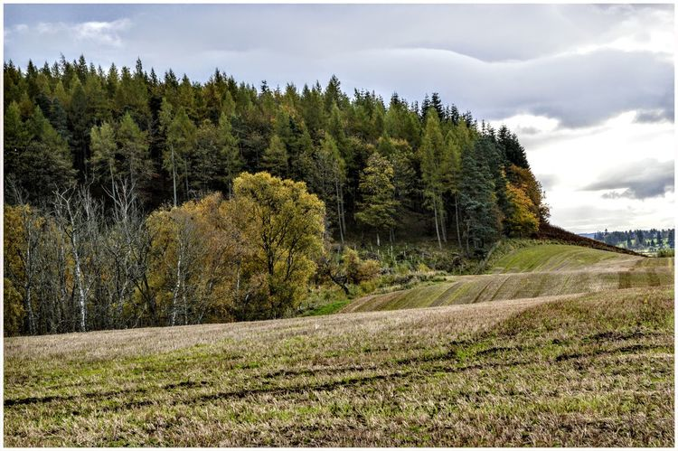 Tree Cloud - Sky Growth Nature Pine Tree Beauty In Nature Rural Scene Landscape Scenics Outdoors Seasons Autumn Colors Beauty In Nature Green Color Crop  Field Nature Agriculture Cultivated Land Kirriemuir Countryside Textured  Backgrounds Treeline Built Structure Hills And Valleys