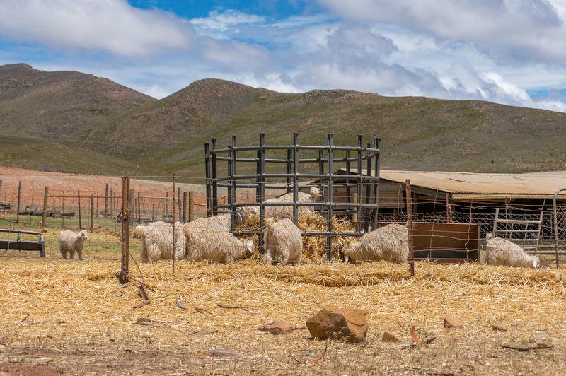 Sheep Farm Pen