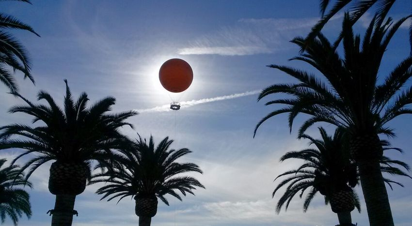 At The Park ....perfect moment in the palm court Hot Air Balloon Eclipse Palm Trees