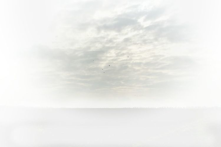 Solitude AntiM Atmosphere Atmospheric Mood Beach Bird Pastel Power Cloud Distant EyeEm Best Shots Eyemnaturelover Flying Freedom Horizon Over Water Majestic Melancholic Cityscapes Mid-air Ocean Outdoors Sand Sea Shore Sky Studies Of Whiteness Tranquility Vacations