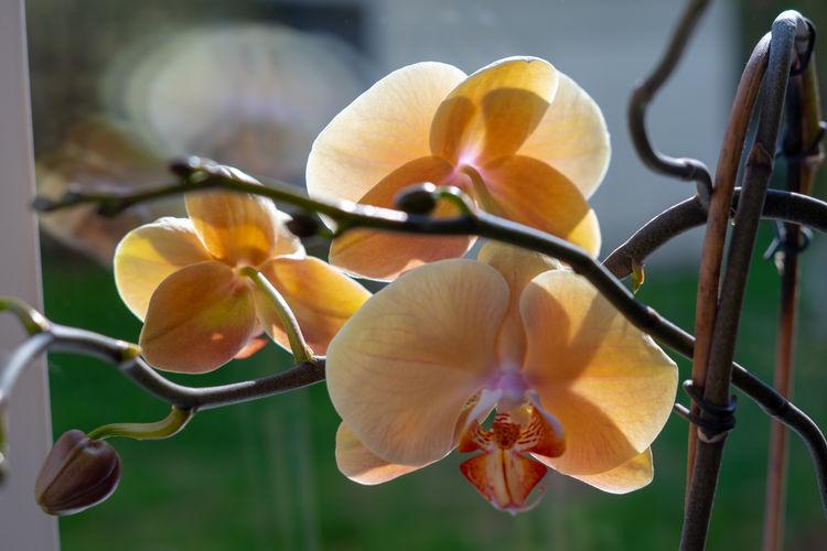 Close-up Flower