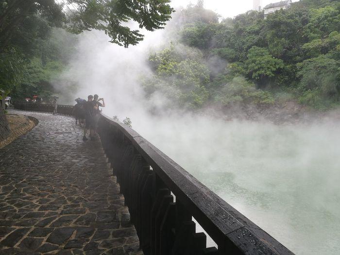 Tree Water Fog