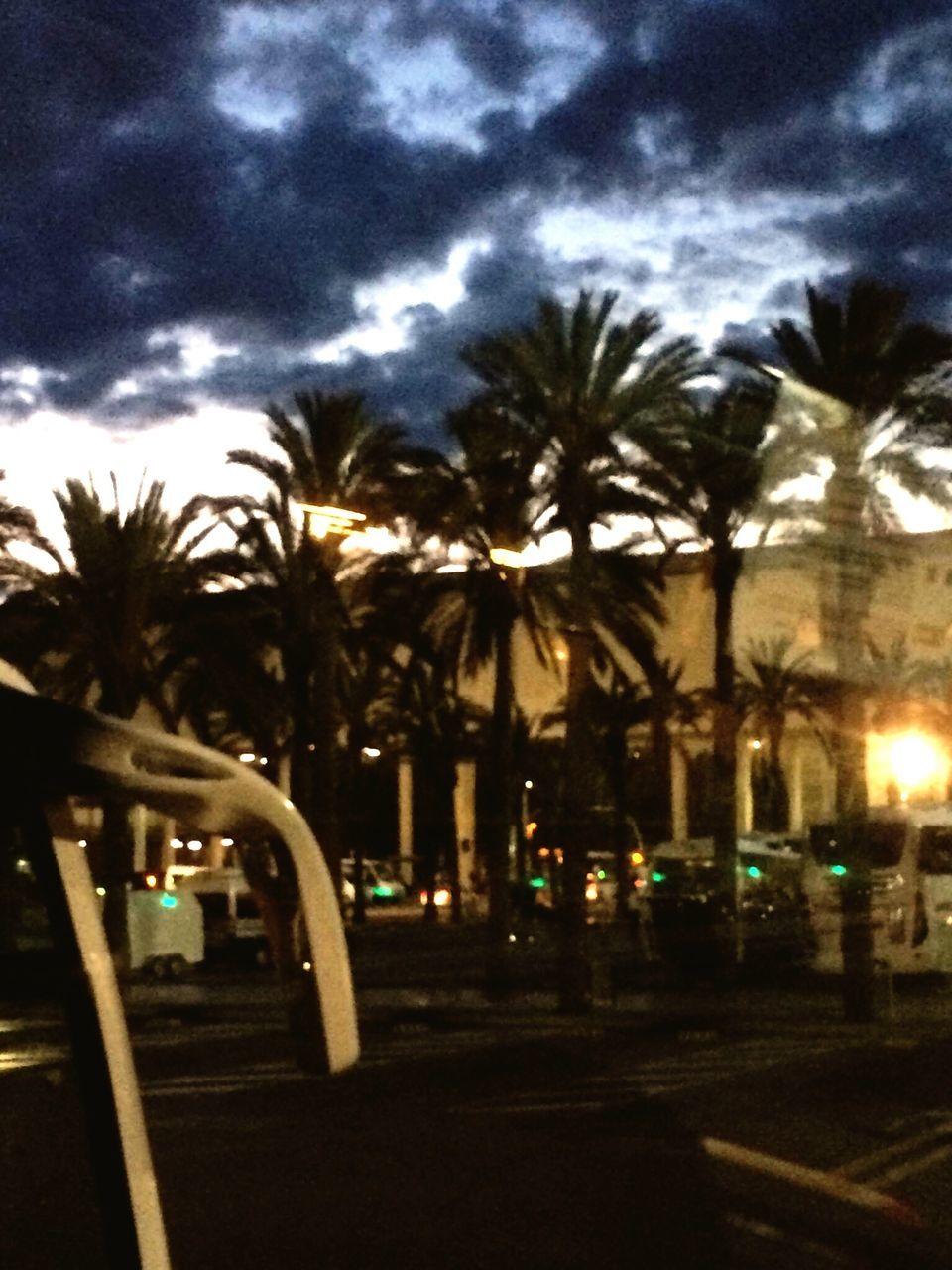 tree, sky, palm tree, cloud - sky, illuminated, outdoors, night, no people, street light, storm cloud, city, nature, close-up