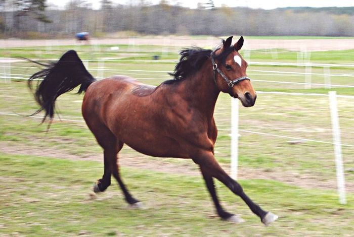 My Love. My Soul. My Everything. Horse Horses Arabian Arabic Love