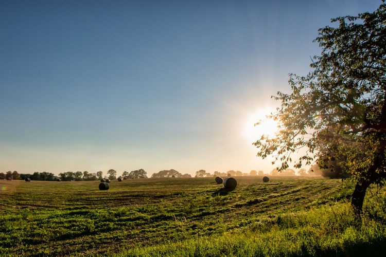 Agriculture Bale  Field Landscape Nature No People Outdoors Rural Scene Sunlight Sunset Tranquility Tree