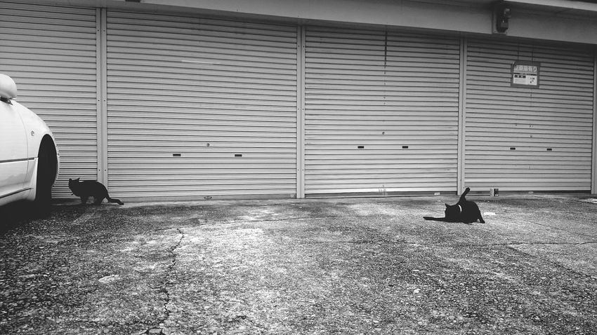 Cute Cats Cat Street Photography Oishii 美味しい Taking Photos Catlovers Cleaning Hygiene Blackandwhite Not Shy !  Streetphoto_bw