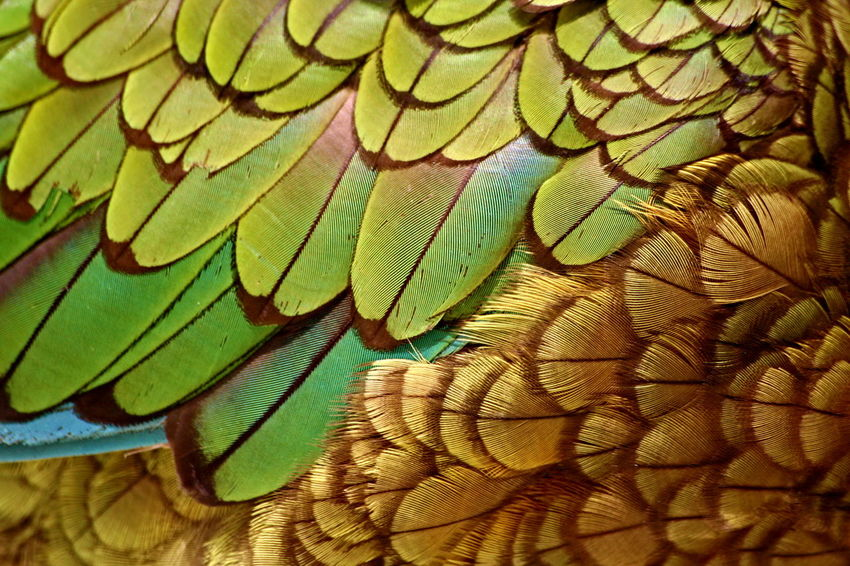 Animal Themes Backgrounds Beauty In Nature Bird Close-up Day Green Color Ke Nature Nestor Kea Nestor Kea (Nestor Notabilis) Nestor Notabilis New Zealand No People Parrot Kea Texture Fresh On Market 2016 Visual Creativity