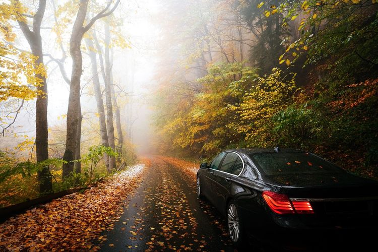 Car on mountain road amidst trees during autumn