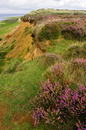 Morsum Cliff, Sylt Morsum-Kliff Sylt, Germany Beauty In Nature Cliff Flower Germany Grass Heather Landscape Morsum Nature No People Outdoors Scenics Sylt Travel Destinations