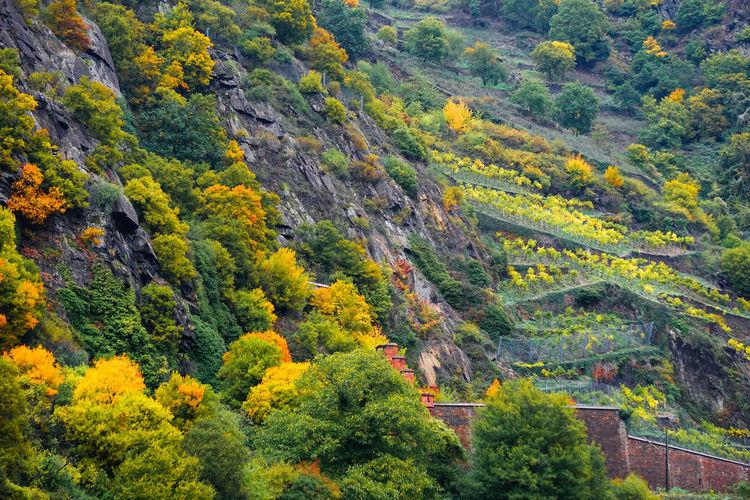Scenic view of trees