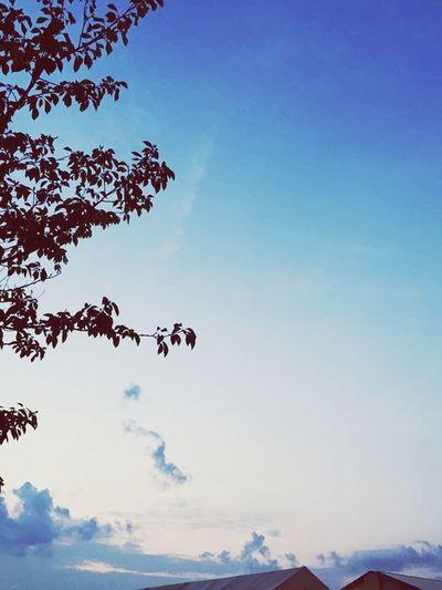 Nimble sky. Sky