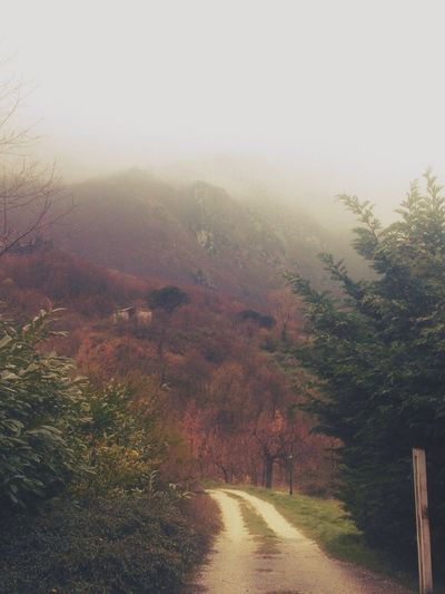 Countryside Wanderlust Things I Saw Today EyeEm Nature Lover Walking Around Strange Spring Country Road FogpornFoggy MorningColors Of Spring