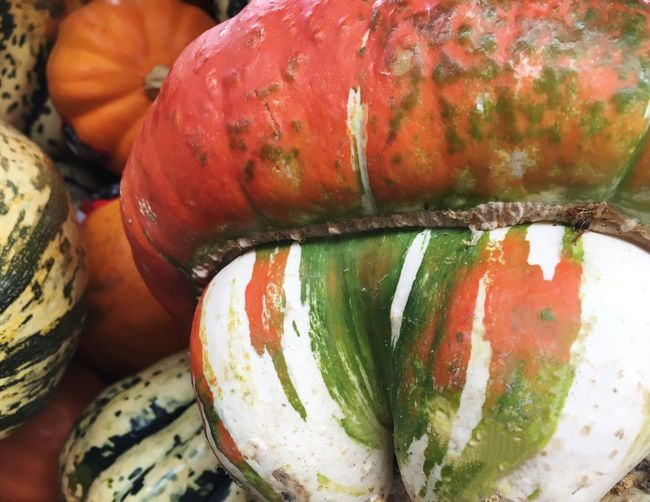 Fall colors Close-up Food Vegetable Squash Time Fall Beauty Color Explosion Healthy Eating