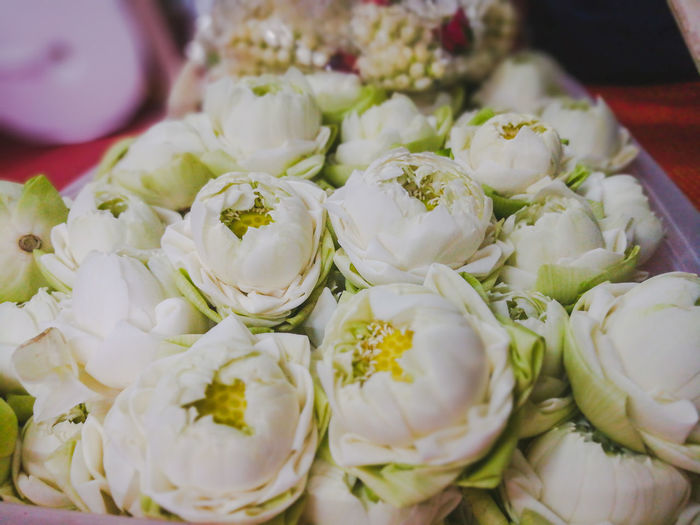 High angle view of white roses