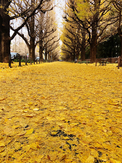 Autumn leaves on field against trees in park