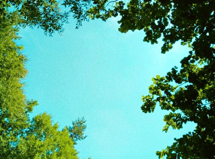 Clear Sky Beauty In Nature Sky Outdoors Tree Green Color Nature