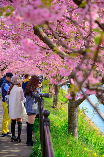 Woman standing on cherry blossom tree