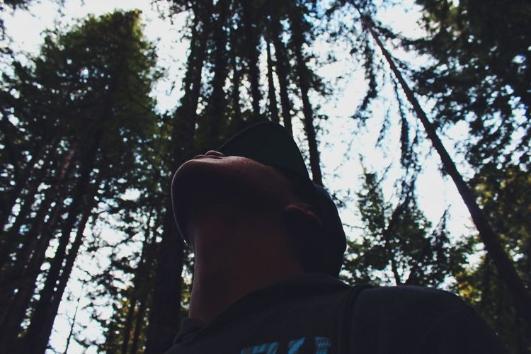 look up Forest Focus Trees Adventure Hiking Capture The Moment