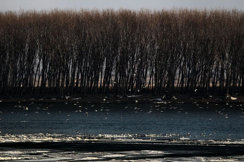 Winter on Danube river Beauty In Nature Birds Danube Danube River Day Landscape Large Landscape Mood Nature No People Outdoors River Scenics Sky Tranquil Scene Tranquility Tree Water Waterscape Winter