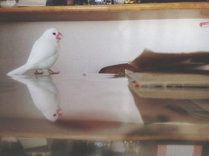 文鳥さん。 First Eyeem Photo