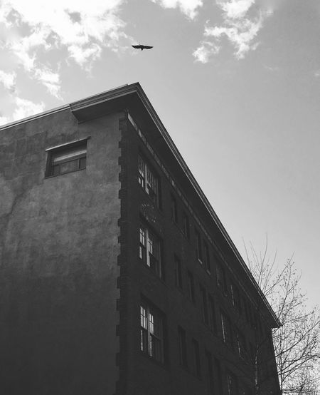 Heritage building with leading lines pointing to the blackbird in the sky Angles Angles And Lines Architecture Architecture_collection Black And White Black And White Collection  Black And White Photography Blackbird Building Exterior Heritage Heritage Building Looking Up Looking Up Architecture Low Angle View