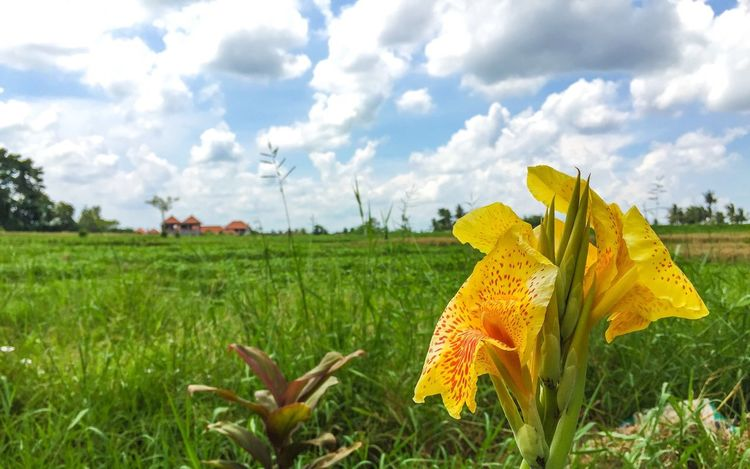 Flower Lovelyplace Lovelyview Ilovemylife Cloudandsky