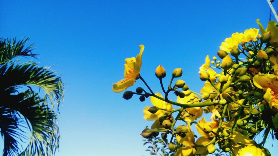 Low Angle View Of Yellow Flowers Growing On Plant Against Sky