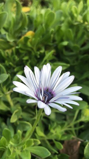 A simple flower Nature Photography Nature Nature_collection Flowering Plant Flower Plant Fragility Beauty In Nature Freshness Vulnerability  Close-up