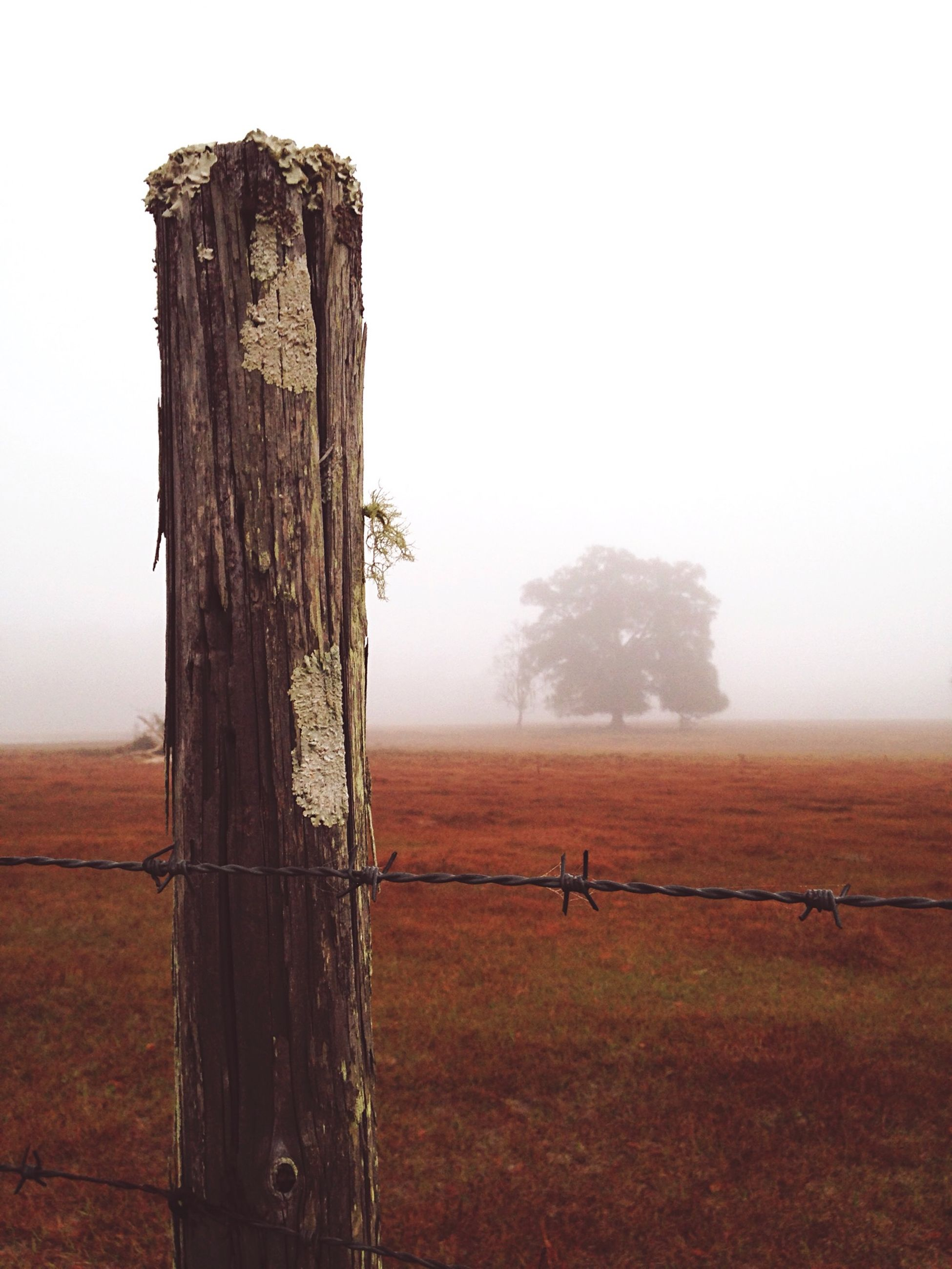 landscape, clear sky, tranquil scene, tranquility, field, nature, scenics, wooden post, wood - material, fence, tree trunk, copy space, beauty in nature, non-urban scene, remote, grass, sky, horizon over land, tree, no people