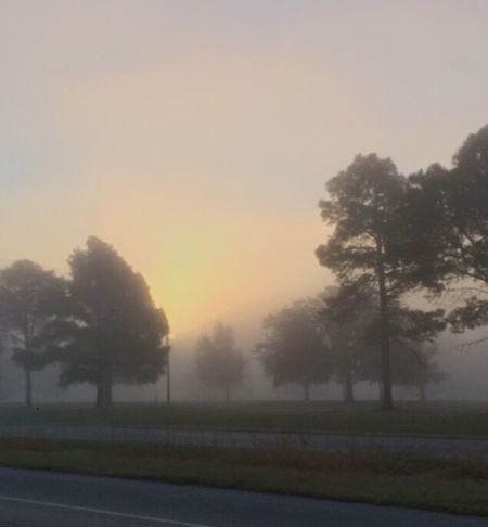 Tree Nature Tranquility Fog No People Sunset Tranquil Scene Outdoors Beauty In Nature Road Sky Landscape Day Fortworthtx